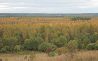 forêt russie1