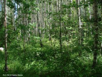 forêt russie2