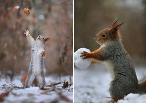 squirrel-photography-russia-vadim-trunov-17